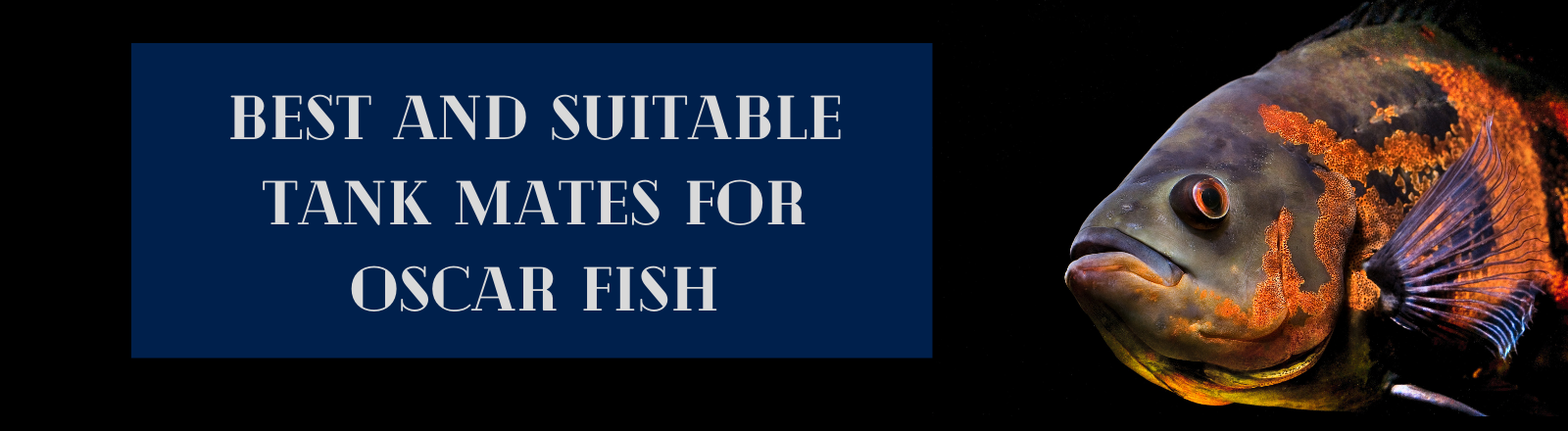 Oscar fish Tank mates- 6 Best and Compatible Fishes